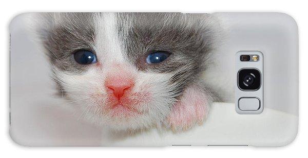 Kitten Galaxy Case