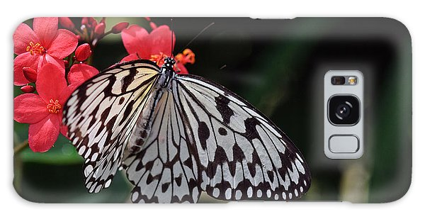 Large Tree Nymph Butterfly Galaxy Case