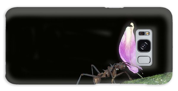 Leafcutter Ant Galaxy Case