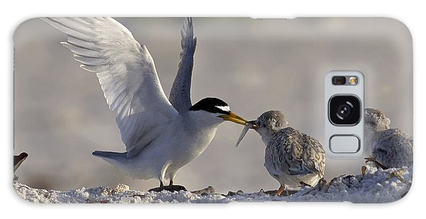 Least Tern Feeding It's Young Galaxy Case by Meg Rousher