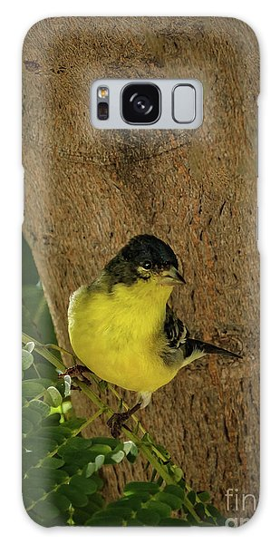 Sangre De Cristo Galaxy S8 Case - Lesser Goldfinch by Robert Bales