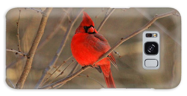 Male Northern Cardinal Galaxy Case