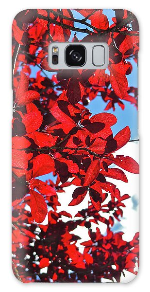 Plum Tree Cloudy Blue Sky 3 Galaxy Case by CML Brown