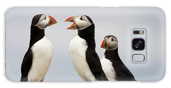 Puffins Chat On The Farne Islands Great Britain Galaxy Case