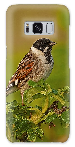 Reed Bunting Galaxy Case by Paul Scoullar