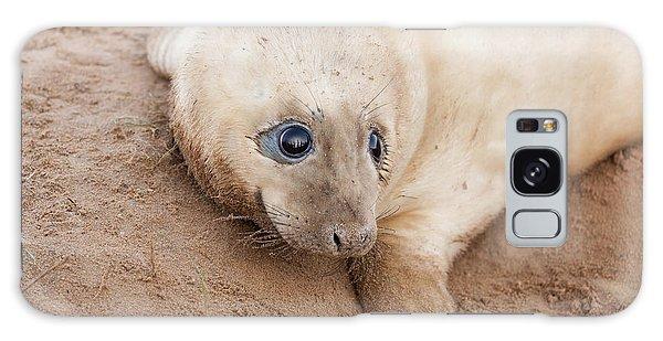 Seal Pup Galaxy Case