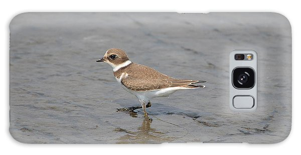 Semipalmated Plover Galaxy Case