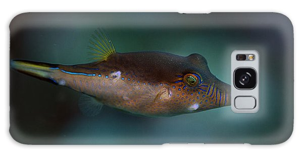 Sharpnose Puffer Galaxy Case
