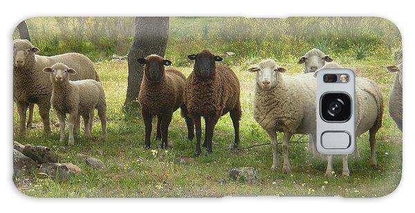 Sheep In Extremadura Galaxy Case