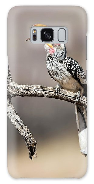 Southern Yellow-billed Hornbill Galaxy Case