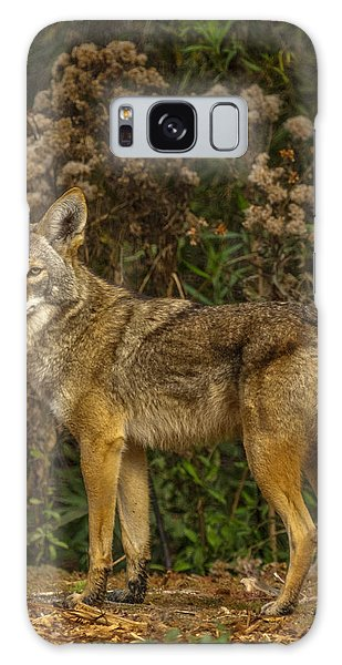 Coyote Galaxy Case - The Coyote by Ernie Echols