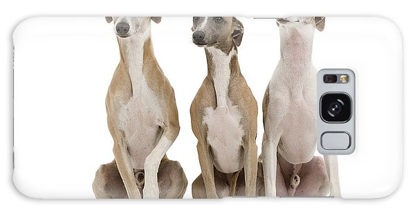 Sighthound Galaxy Case - Whippets by Jean-Michel Labat