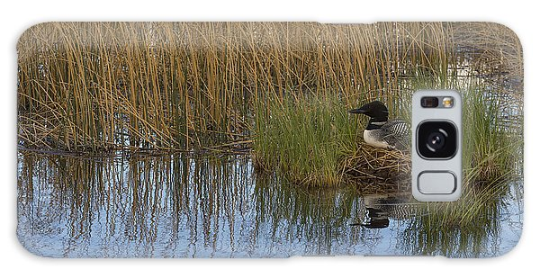 Common Loon Gavia Immer, Canada Galaxy Case by John Shaw