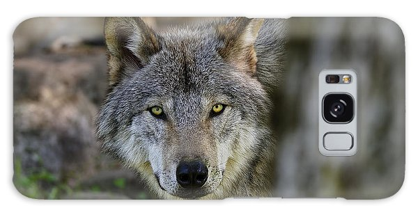 Timber Wolf Pictures Galaxy Case