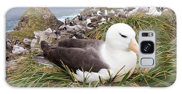 A Black Browed Albatross Galaxy S8 Case