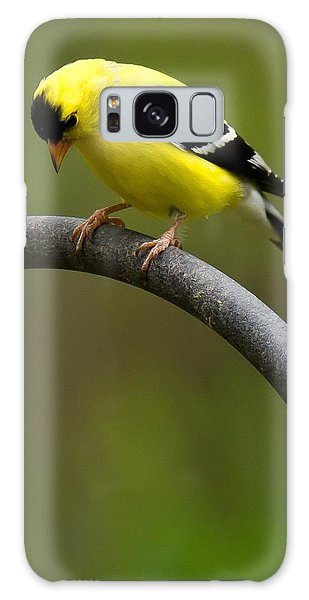 American Goldfinch Galaxy Case