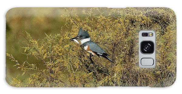 Belted Kingfisher With Fish Galaxy Case