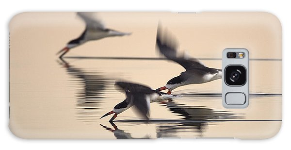 3 Black Skimmers  382z3059 Galaxy Case by David Orias