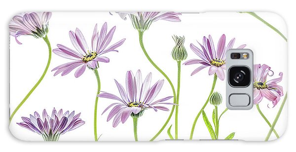 Daisy Galaxy Case - Cape Daisies by Mandy Disher