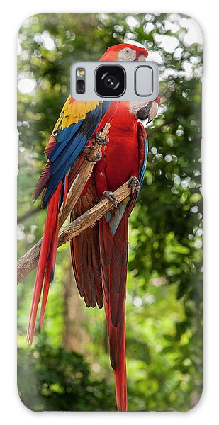 Macaw Galaxy Case - Central America, Honduras, Roatan by Jim Engelbrecht