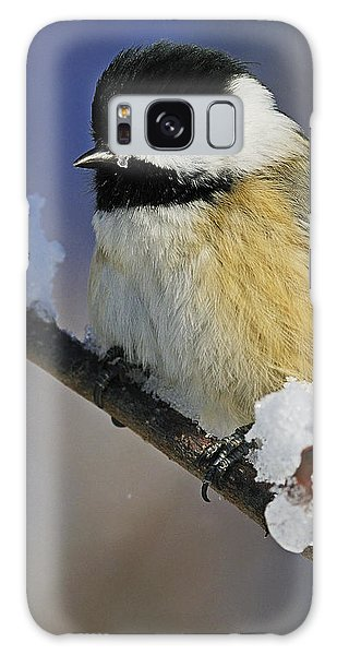 Winter Chickadee... Galaxy Case