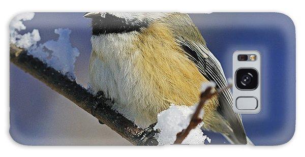 Winter Chickadee... Galaxy Case
