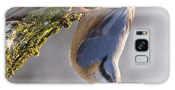 Eurasian Nuthatch Galaxy Case
