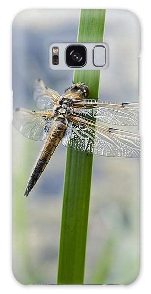 Four-spotted Chaser Dragonfly Galaxy Case