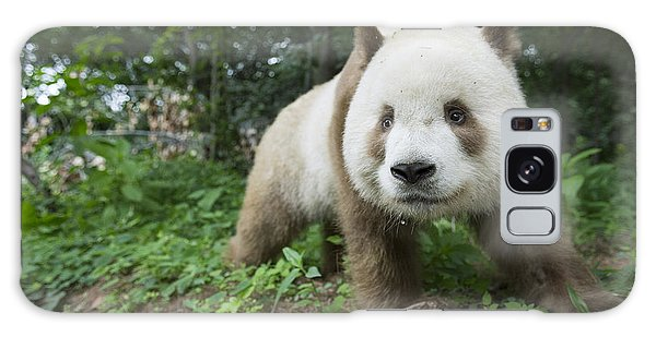 Giant Panda Brown Morph China Galaxy Case