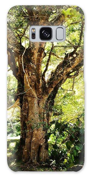 Kingdom Of The Trees. Peradeniya Botanical Garden. Sri Lanka Galaxy Case