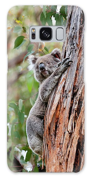 Koala (phascolarctos Cinereus Galaxy Case