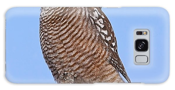 Northern Hawk Owl Galaxy Case