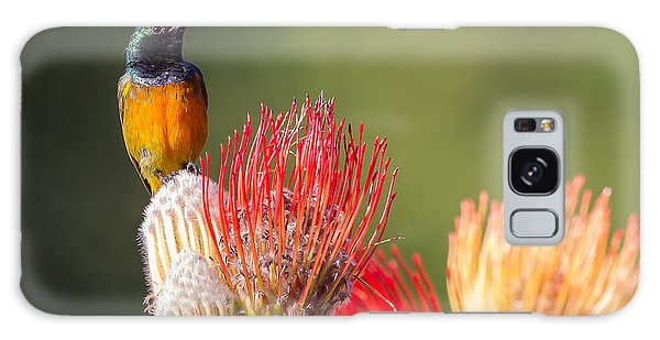 Orange-breasted Sunbird Galaxy Case