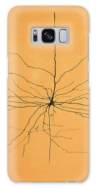 Pyramidal Cell In Cerebral Cortex, Cajal Galaxy Case