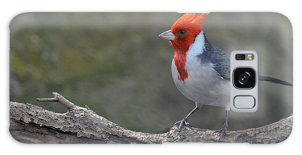 Red-capped Cardinal Galaxy Case