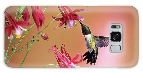 Aquilegia Galaxy Case - Ruby-throated Hummingbird (archilochus by Richard and Susan Day