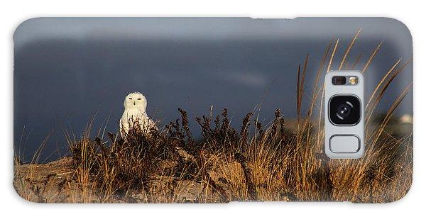 Snowy Owl Hampton Bays New York Galaxy Case