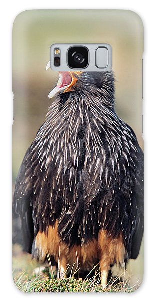 Albatross Galaxy S8 Case - Striated Caracara Or Johnny Rook by Martin Zwick