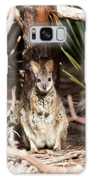 Tammar Wallaby (macropus Eugenii Galaxy Case by Martin Zwick