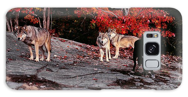 Timber Wolves Under A Red Maple Tree - Pano Galaxy Case