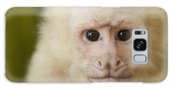 White-faced Capuchin Galaxy Case