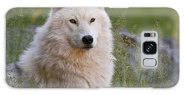 Arctic Wolf Galaxy Case