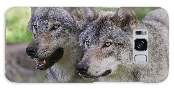 Timber Wolf Pictures Galaxy Case by Wolves Only