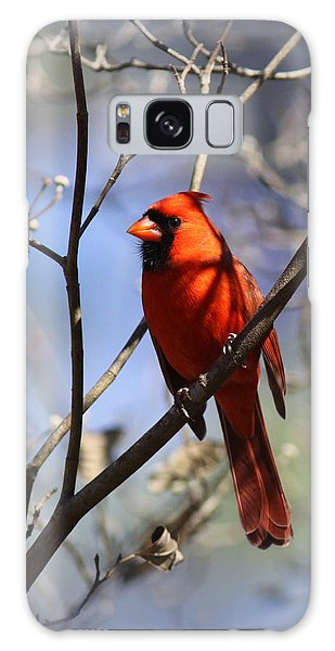 3477-006- Northern Cardinal Galaxy Case