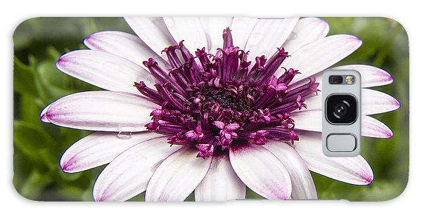 3d Berry White Cape Daisy - Osteospermum  Galaxy Case by Darleen Stry