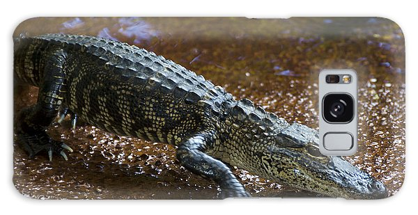 American Alligator Galaxy Case