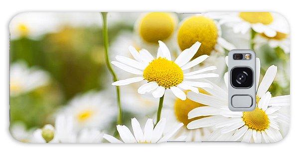 Herbs Galaxy Case - Chamomile Flowers by Elena Elisseeva