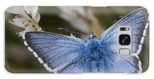 Common Blue Butterfly Galaxy Case by Shirley Mitchell