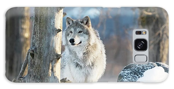 Winter Galaxy Case - Female Gray Wolf  Canis Lupus by Doug Lindstrand