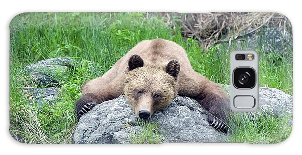 Grizzly Bears Galaxy Case - Grizzly Bear by Dr P. Marazzi/science Photo Library